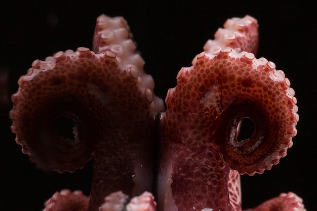 Close-up verse octopus op lijst