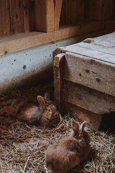 Close-up verticaal schot van bruine konijnen die op tarwe in een schuur leggen