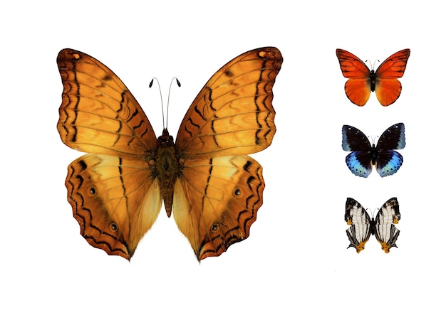 Close-up vlinder geïsoleerd op wit een van een set