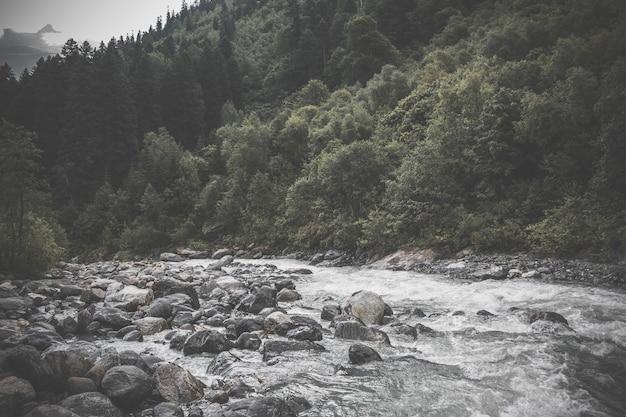 Close-up weergave rivier scènes in bos, nationaal park dombai, kaukasus, rusland, europa. zomerlandschap, zonnig weer, dramatische blauwe lucht en zonnige dag
