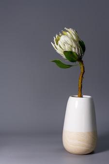Close-up witte koning protea bloem in minimalistische keramische vaas