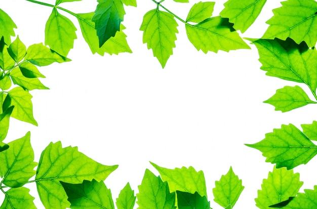Close-up witte ruimte op het midden van frame door verse groene bladeren die op witte achtergrond worden geïsoleerd