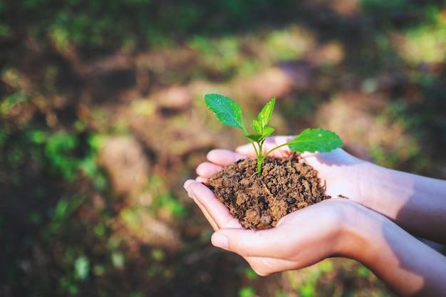 Close-upbeeld van handen die kleine boom met grond houden om met aardachtergrond te groeien