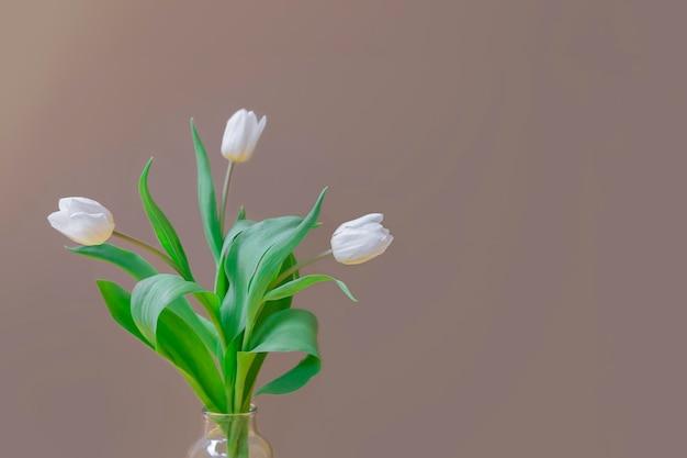 Close-upbeeld van lenteboeket met witte tulpen in een glasvaas op neutrale achtergrond met ruimte voor tekst
