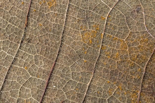 Close-upbladeren, patronen van droge bladeren