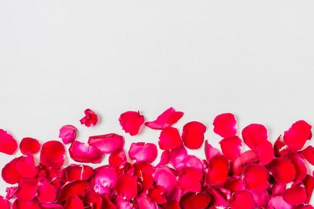 Close-upbloemblaadjes van rozen met exemplaarruimte