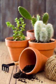 Close-upbloempot en cactussen
