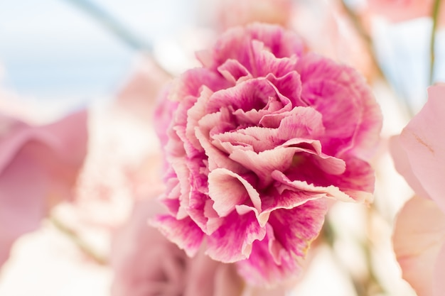 Close-upboeket van verse anjer. evenementdecoratie met verse bloemen