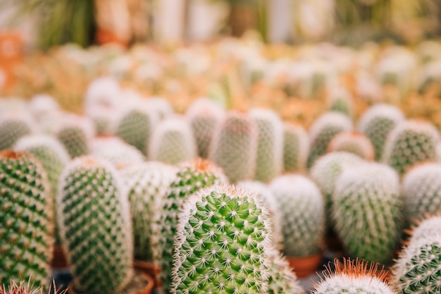 Close-updoornen van cactus