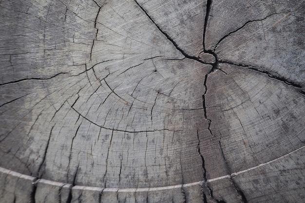 Close-updwarsdoorsnede en de de jaarlijkse textuur en achtergrond van de ringsboom,