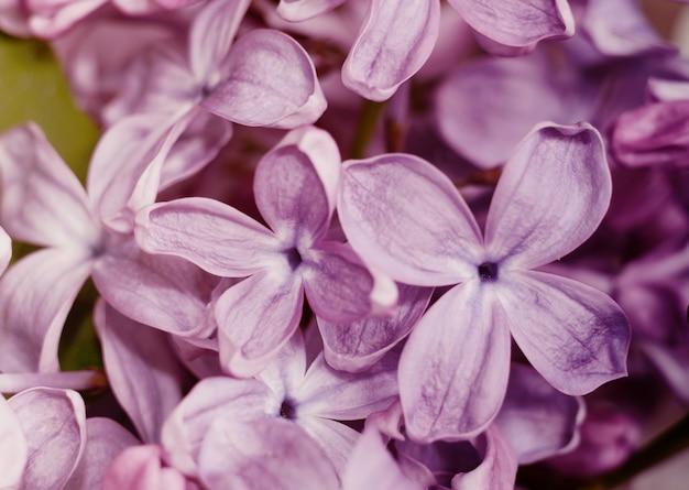 Close-upfoto van mooie lilac bloemen.
