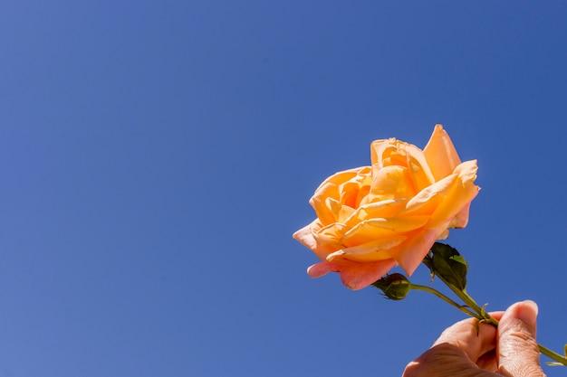 Close-uphand die oranje nam houden toe