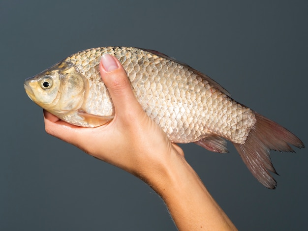 Close-uphand die ruwe vissen houden