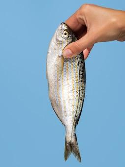 Close-uphand die verse vissen houden