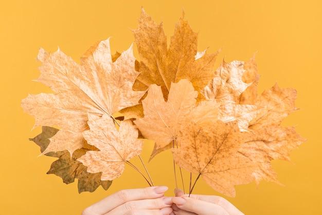 Close-uphanden die gele bladeren houden