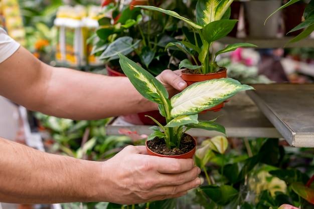Close-uphanden die kamerplanten houden
