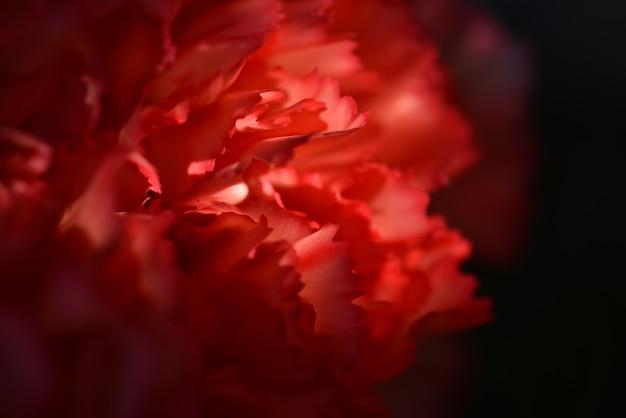 Close-upmening van rode bloemblaadjes