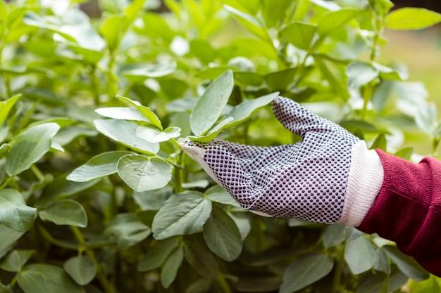 Close-upmens met het tuinieren handschoenen