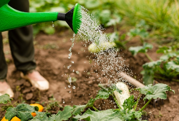 Close-uppersoon die de gewassen water geeft