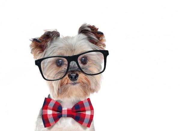 Close-upportret van een hond die glazen en vlinderdas dragen