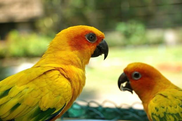 Close-upportret van gele dwergpapegaaipapegaai met vage etende vogel dichtbij in groene tuin