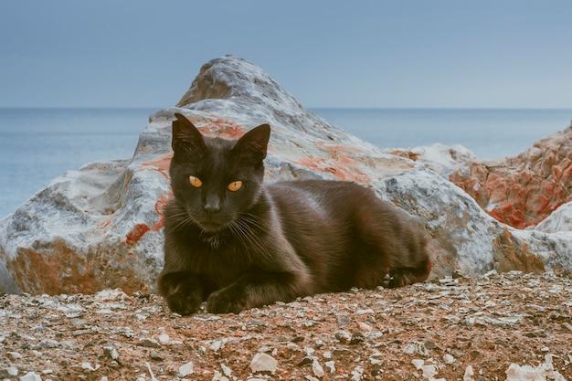 Close-upportret van zwarte kat met oranje ogen