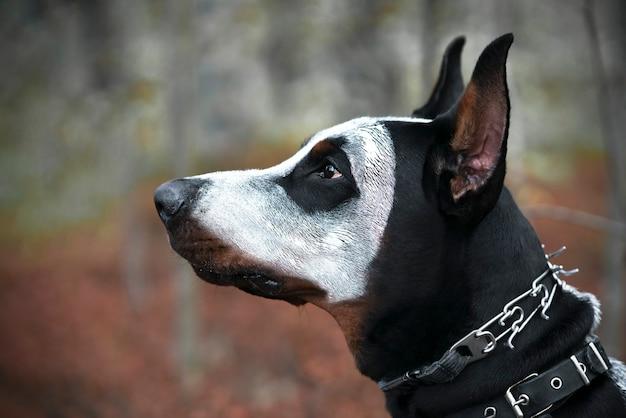 Close-upprofiel van een hond, dobermann. halloween, spookhuisdier in spookhorrormasker.