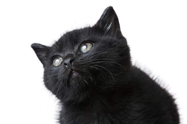 Close-upschot van een leuk zwart katje dat op een wit wordt geïsoleerd