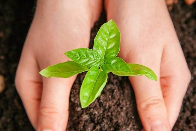 Close-upschot van een vrouw die een groene installatie in palm van haar hand houdt. detailopname