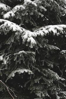 Close-uptakken van bladeren met sneeuw