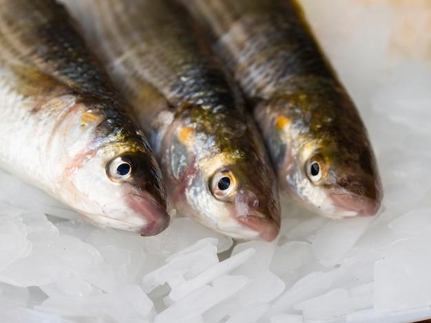 Close-upverscheidenheid van makrelen op ijsblokjes