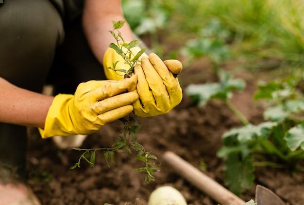 Close-upvrouw het oogsten in tuin