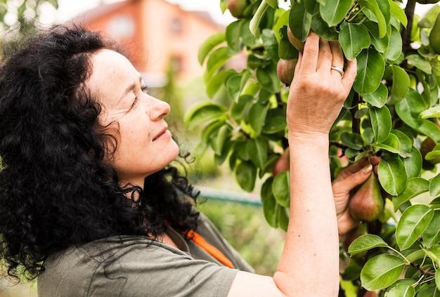 Close-upvrouw het oogsten peren