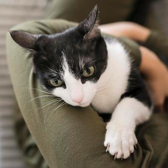 Close-upvrouw het spelen met kattenzitting op stoel