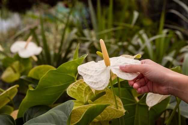 Close-upvrouw wat betreft bloemen in serre