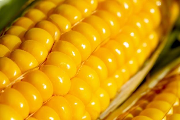 Close-upzaden van verse suikermaïs op een rij. een druppel water op het gele zaad.