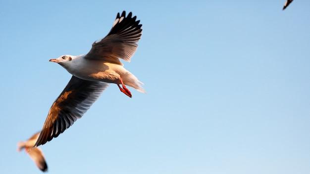 Close-upzeemeeuwen die op de blauwe hemel, als dier en aardconcept vliegen.