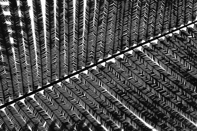 Closeup blad patroon - silhouet
