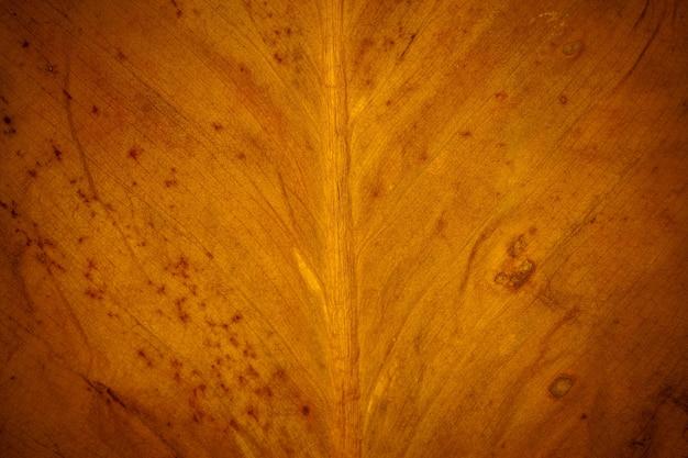 Closeup bladgoud voor achtergrond.