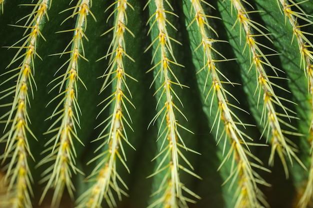 Closeup cactus doorn aard achtergrond