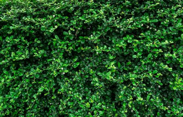 Closeup groenblijvende haagplanten.