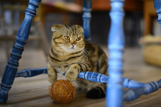 Closeup kleine kat op de vloer in dieren café