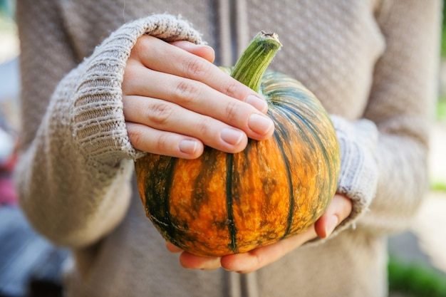 Closeup natuurlijke herfst herfst weergave vrouw handen met gele pompoen inspirerende natuur oktober of ...