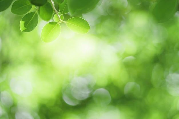 Closeup prachtig uitzicht op natuur groen blad op groen wazig achtergrond met zonlicht en kopieer ruimte. het wordt gebruikt voor natuurlijke ecologie zomer achtergrond en vers behang concept.