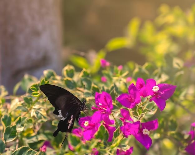 Closeup vlinder op bloem met zonlicht in de ochtend.