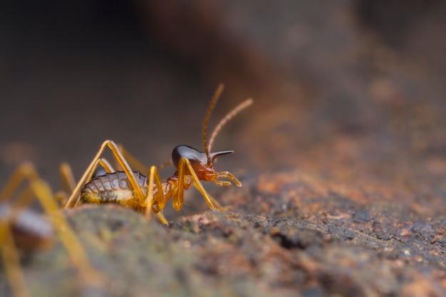 Closeup werknemer termiet op de grond