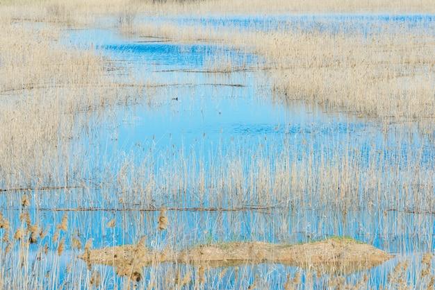 Cluster van riet in conistonmeer met bergen in oppervlakte en blauw water en heldere blauwe hemel.