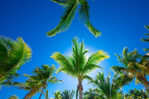Coconut palmbomen, mooie tropische achtergrond