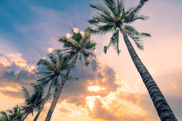 Coconut palmboom op blauwe hemelachtergrond met vintage afgezwakt.