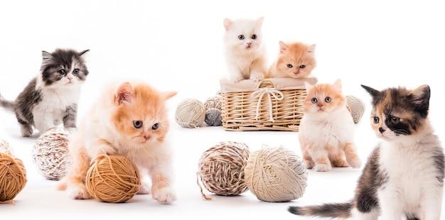 Collage met pluizige kittens in mand met bolletjes draad